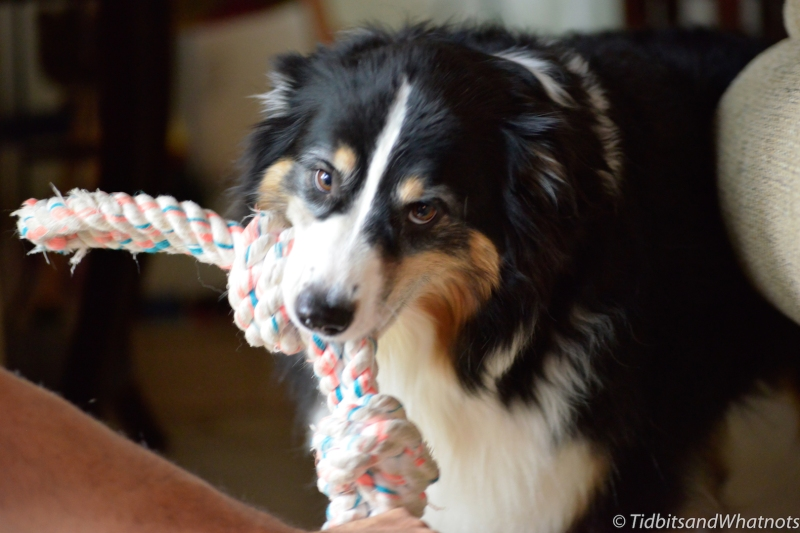 Olive with rope2